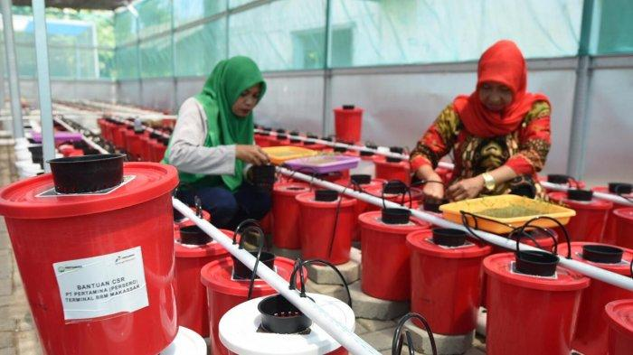 Hidroponik dan Bank Sampah Pertamina, Tingkatkan Kesejahteraan Kaum Ibu di Makassar