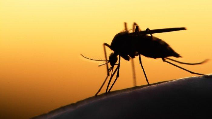 Kasus Demam Berdarah Dengue di NTT Terus Meningkat, 20 Daerah Dikirim Logistik Tambahan