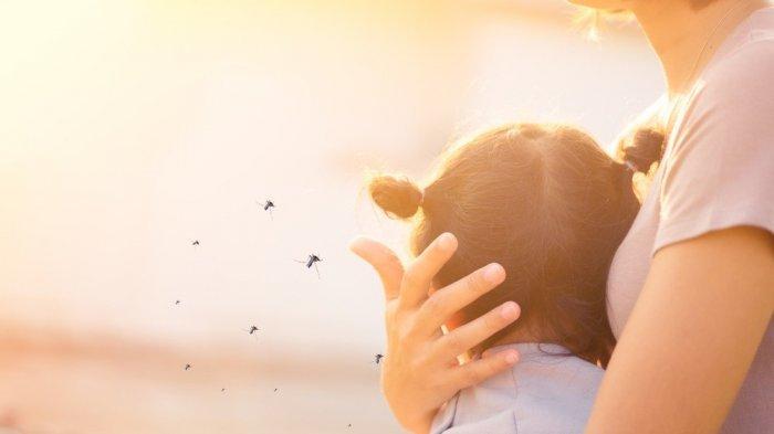 Lindungi keluarga anda dari nyamuk penyebab DBD dengan cairan aerosol seperti HIT Expert Aerosol.