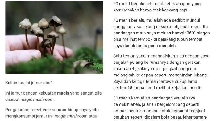 4 Fakta Magic Mushroom, Pengalaman Pria setelah Konsumsi Jamur Ini Sempat Viral di Media Sosial
