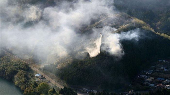 Kebakaran Hutan di Kota Midori, Gunma, Jepang, 24 Rumah Tangga Dievakuasi