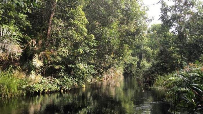 Tim Offroad Galus Terjebak 3 Malam di Hutan Tamiang, Logistik Menipis, Anggota Mulai Sakit