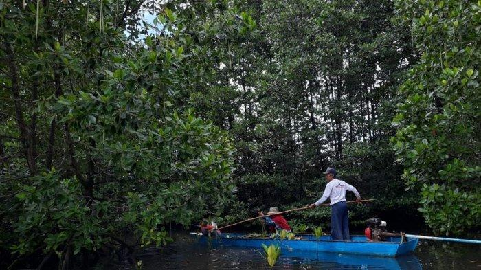 Manfaat Mangrove, Mencegah Erosi Pantai hingga Bisa Jadi Obat