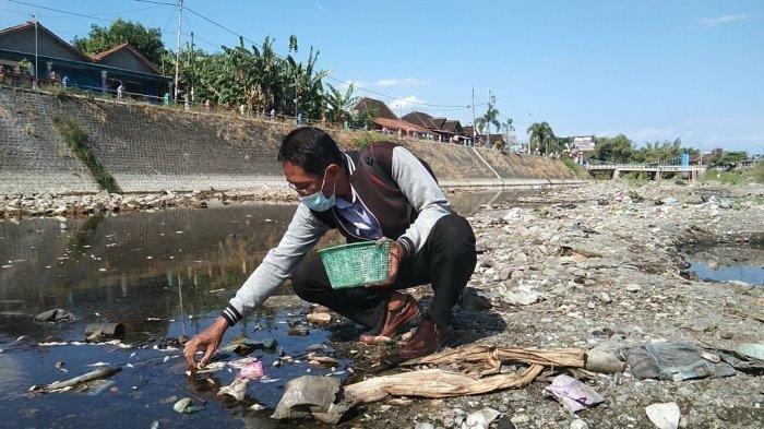 Ribuan Ikan di Kali Dengkeng Klaten, Anak Sungai Bengawan Solo Mati Mendadak