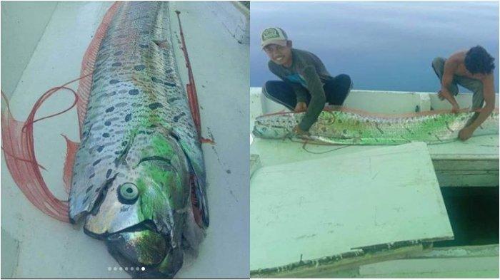 Viral Ikan Oar Legenda Jepang Muncul di Selayar Disebut Pertanda Gempa, Begini Fakta dari BMKG