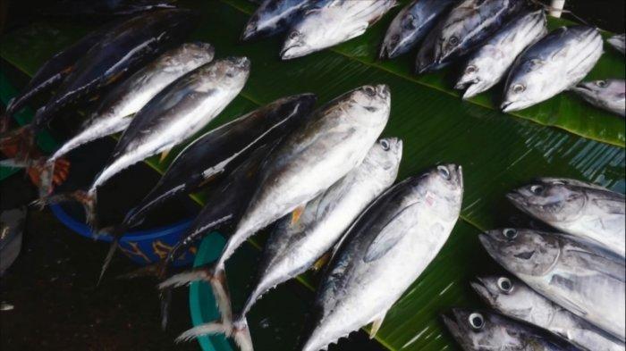 KKP Permudah Ekspor Produk Perikanan dari Manado ke Singapura