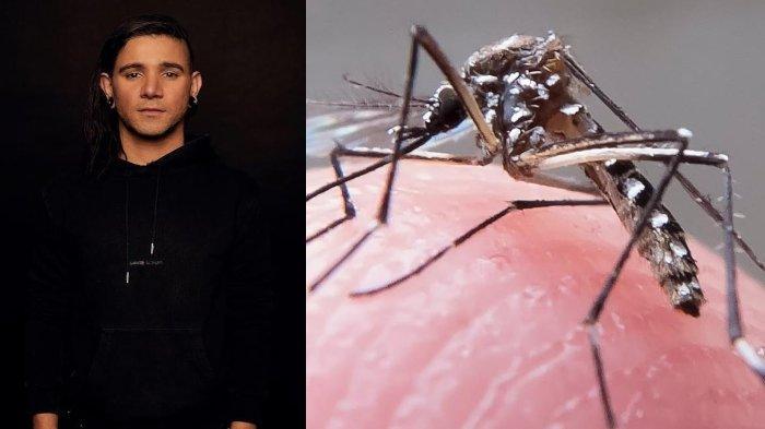 Ilmuwan ungkap lagu DJ Skrillex ampuh usir nyamuk demam berdarah