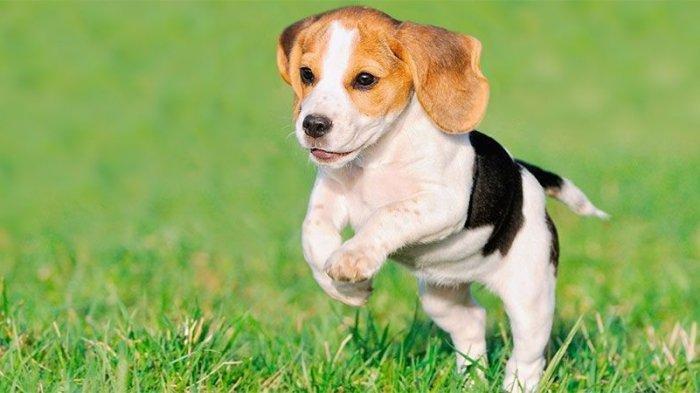 Tes Kepribadian - Mana Anjing yang Kamu Sukai? Pilihanmu Bisa Ungkap Banyak Hal tentang Tabiatmu