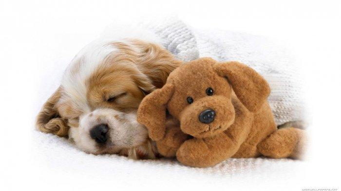 Alat Vital Bayi Digigit Anak Anjing Peliharaan Ayahnya