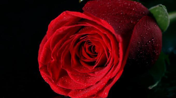 4 Manfaat Air Mawar untuk Kecantikan Kulit, Bisa Meredakan Kemerahan