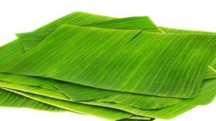 Ilustrasi daun pisang.