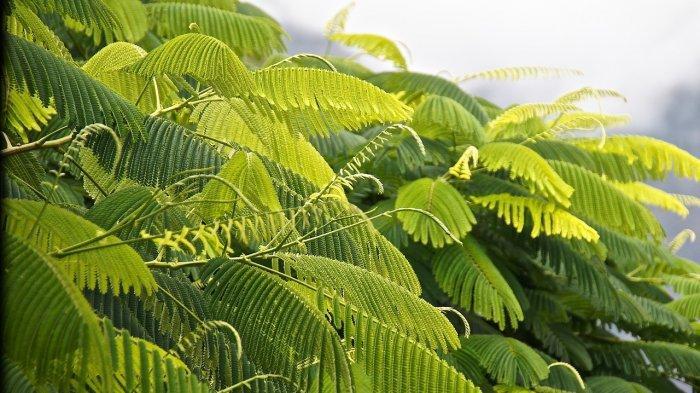 Apa Itu Fotosintesis? Berikut Pengertian, Proses dan Manfaatnya bagi Kehidupan