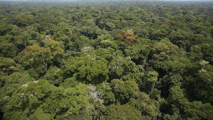 Peningkatan Kapasitas Masyarakat di Kawasan Hutan Menjadi Prioritas Penting Pemerintah