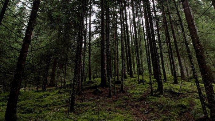 91 Warga Tersesat di Hutan Perbatasan Limapuluh Kota-Agam, Tujuan Cari Air hingga Tempat Wisata