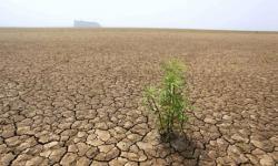 Empat Provinsi Ini Berpotensi Alami Kekeringan saat Musim Hujan