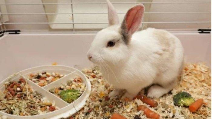 Ilustrasi kelinci di rumah.