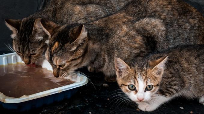 Selain Harimau, Hewan Ini Bisa Positif Covid-19, Ada Kucing, Anjing hingga Primata