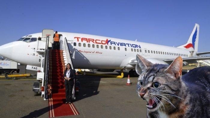 Kucing Serang Pilot dan Awak Kabin, Pesawat Tarco Airlines Terpaksa Putar Balik