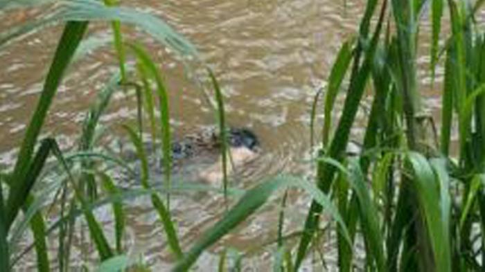 Petugas Temukan Mayat Wanita Mengambang di Kali Sunter