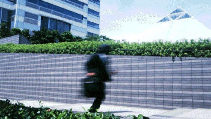 Futaeibuki, Membuat Ninja Jepang Bisa Lari Cepat dan Jauh di Sekitar Pegunungan