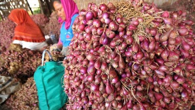 Kementan Pastikan Stok Bawang Merah Aman di Pasaran