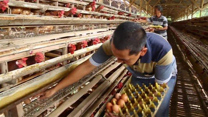 Wamendag: Perdagangan Sektor Perunggasan Harus Untungkan Masyarakat dan Pelaku Usaha