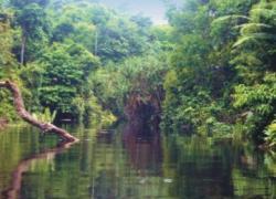 Taman Nasional Bukit Dua Belas di Jambi Terancam Punah