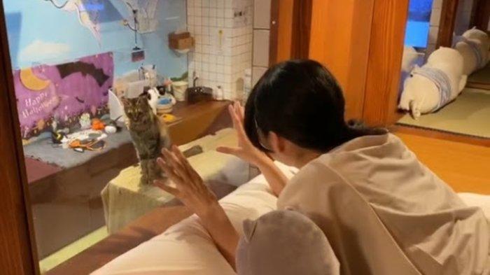 Hanya Ada di Jepang, Hotel Kapsul Ini Tawarkan Kucing untuk Jadi Teman Tidur