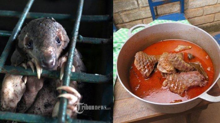 Bukan Kelelawar, Trenggiling Disebut Peneliti Paling Berpotensi jadi Perantara Virus Corona