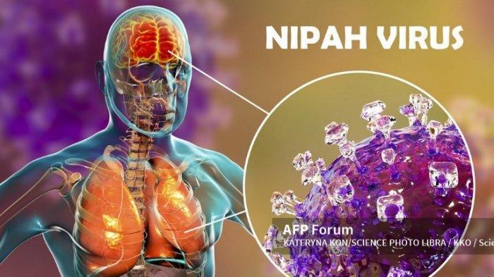 Ilmuwan Khawatirkan Virus Nipah akan Jadi Pandemi Selanjutnya, Tingkat Kematian Capai 75%