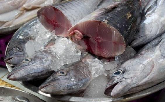 Waspadai Beli Ikan yang Diberi Suntikan Formalin, Ini Ciri-cirinya