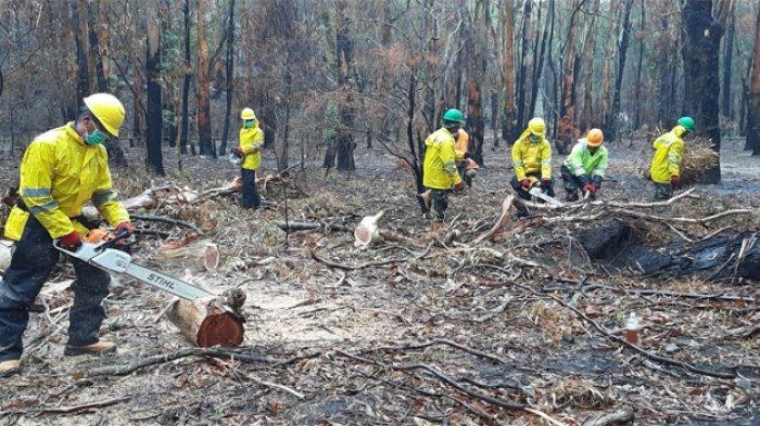 Musim Kemarau, Pemerintah Minta Semua Pihak Waspadai Kebakaran Lahan dan Hutan