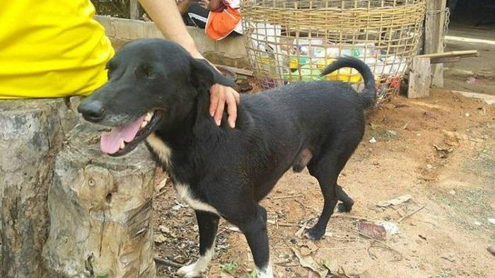 JAAN Temukan Penampungan Anjing di Belakang Plaza Semanggi untuk Dikonsumsi