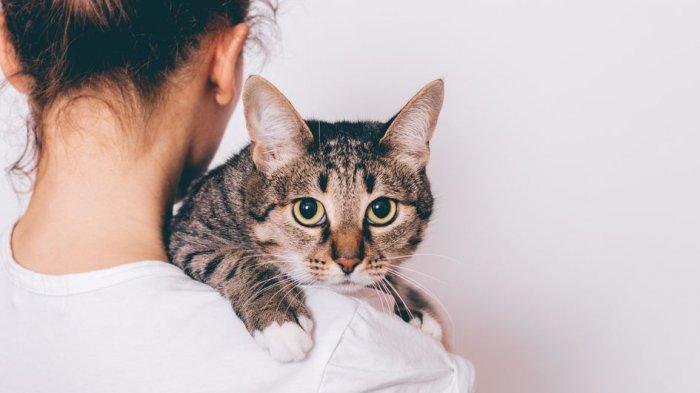Bisa Ganggu Kesehatan, Ini Bahaya Beri Paracetamol pada Kucing dan Anjing yang Sedang Sakit