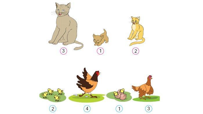 Jawaban halaman 8 buku tematik Tema 6 kelas 4