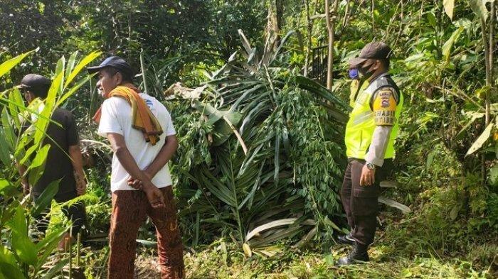Macan Dahan Diduga yang Menerkam Tiga Kambing di Jorong Paraman Sumatera Barat