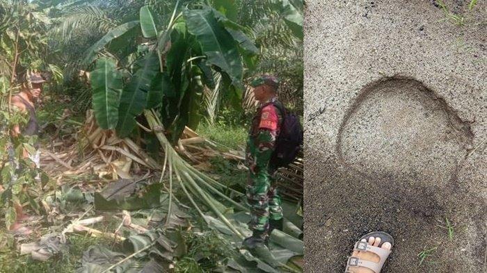 Gajah Liar Rusak Halaman Sekolah di Musi Rawas Utara, Jejak Kakinya Jadi Petunjuk