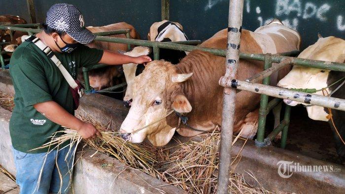 Panitia Pemotongan Hewan Kurban Dilarang Bagikan Daging dengan Sistem Kupon