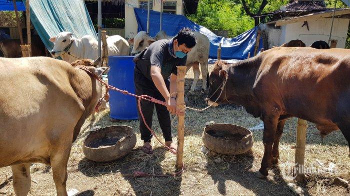 PENJUALAN MENURUN - Penjual hewan kurban di kawasan Mayjen Sungkono, Rabu (8/7). Jelang Hari Raya Idul Adha pada 31 Juli mendatang penjualan hewan kurban mengalami penurunan hingga 30 %.