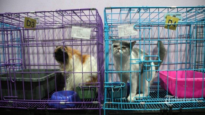 Sempat Dikira Tewas Bersama Pemiliknya 3 Tahun Lalu Karena Longsor, Kucing Ini Ternyata Masih Hidup
