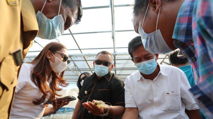 Kembalikan Kejayaan Sektor Perikanan, Pemkab Jembrana akan Bangun Sentra Udang Vaname
