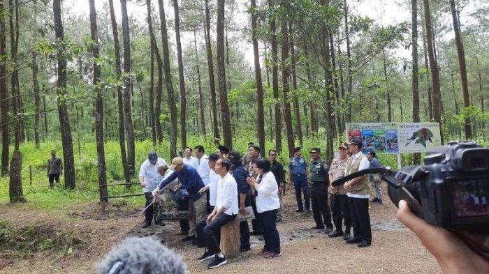 Presiden Jokowi Lepas Sepasang Elang Jawa di Merapi