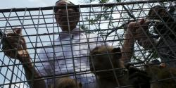 Jokowi: Monyetnya Kurus-kurus Kayak Saya ha ha ha