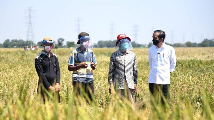 Jokowi: Pemerintah Sebetulnya Tidak Suka dan Tidak Senang Impor Beras. . .