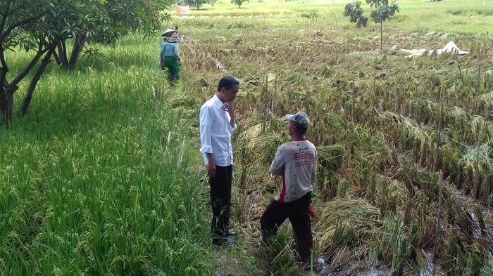 Di Tengah Perjalanan, Jokowi Turun dari Mobil Lalu Ajak Bicara Petani