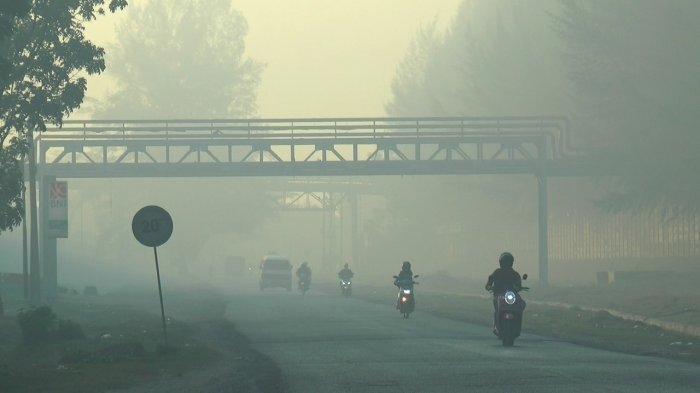 Fenomena Kabut Asap Pekat di Nagan Raya Aceh dan Pekanbaru, BMKG Beri Penjelasan