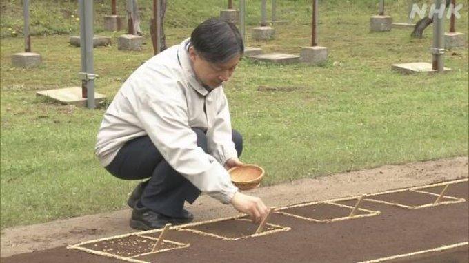 Kaisar Jepang Naruhito Menabur Benih Padi di Lokasi Pembibitan Dalam Istana Kekaisaran
