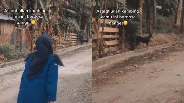 Cerita Gadis Marahi Kambing yang Tak Mau Diam Saat Buat Video, Akui Terganggu dan Hilang Kesabaran