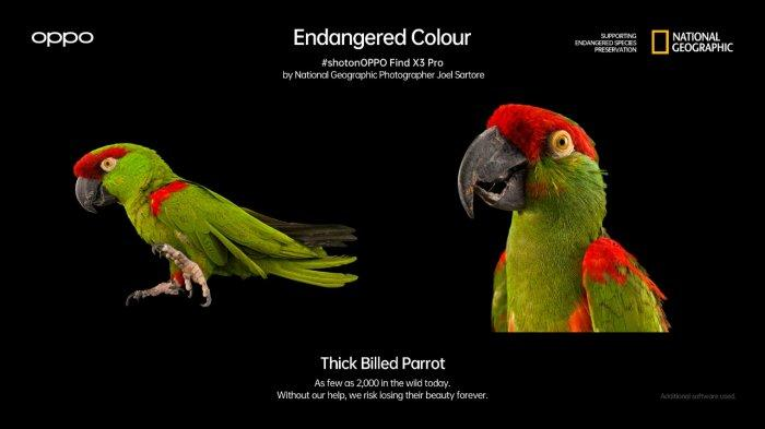 Oppo Find X3 Pro dan National Geographic Kampanyekan 'Endangered Colour'