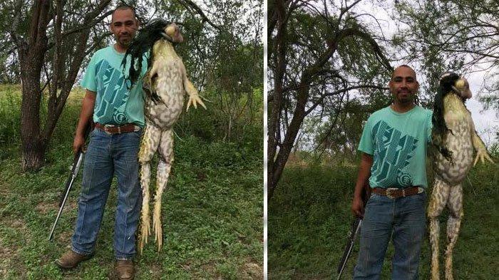 Lihat Ukuran Katak yang Ditangkap Pemburu Ini, Fotonya Viral!